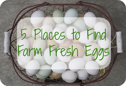 5 Places to Find Farm Fresh Eggs