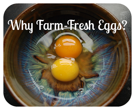Why Farm Fresh Eggs?