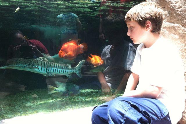 Audubon Aquarium Bradley
