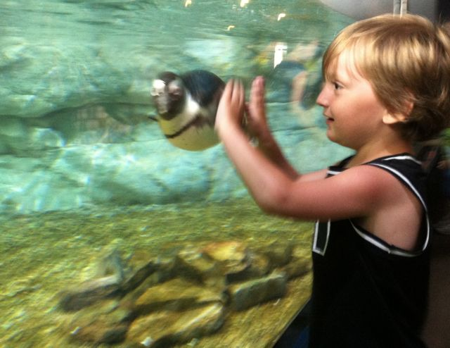 Audubon Aquarium Cameron and Penguin