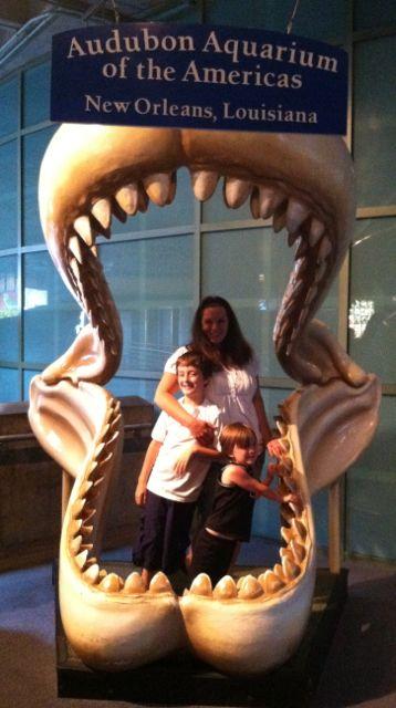 Audubon Aquarium jaws