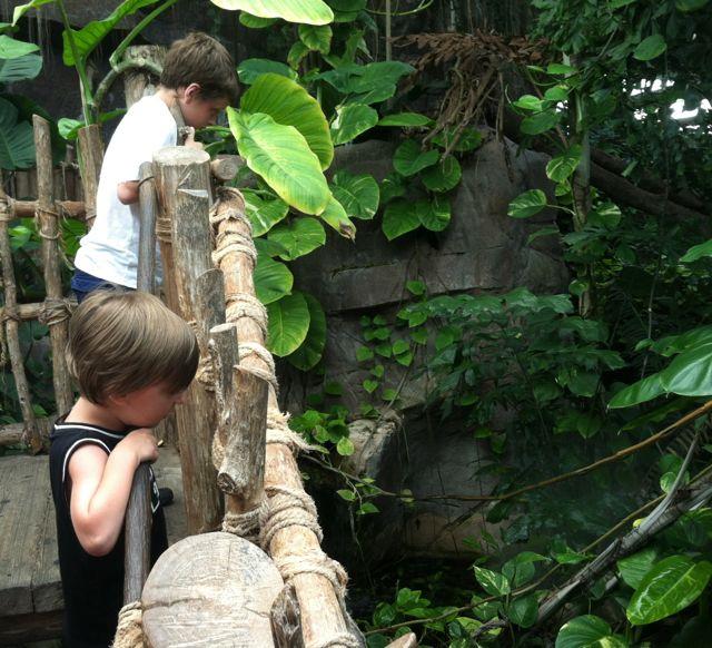 Audubon Aquarium rain forrest bridge