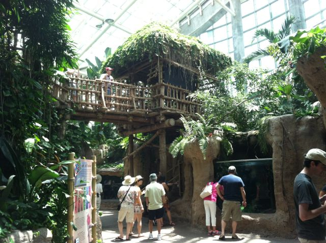 Audubon Aquarium rainforest