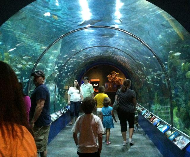Audubon Aquarium reef