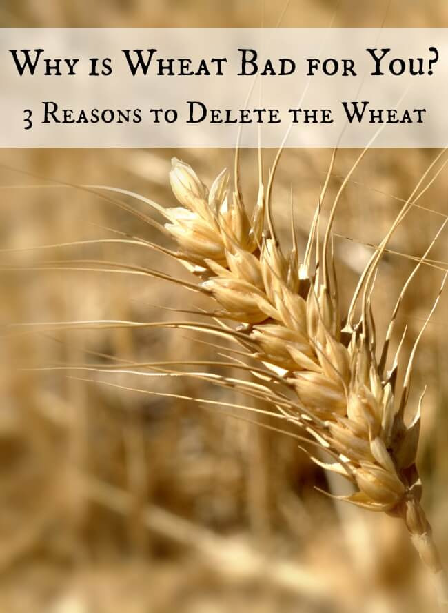Why is Wheat Bad for You?